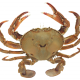 Paddle crabs